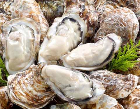広島牡蠣の通販